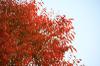 Autumn01s