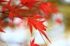 Autumn07s