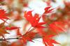 Autumn09s