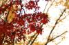 Autumn12s