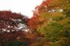 Autumn26s