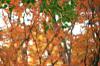 Autumn02s
