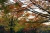 Autumn04s