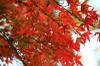 Autumn06s