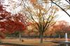 Autumn10s