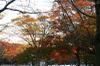 Autumn16s